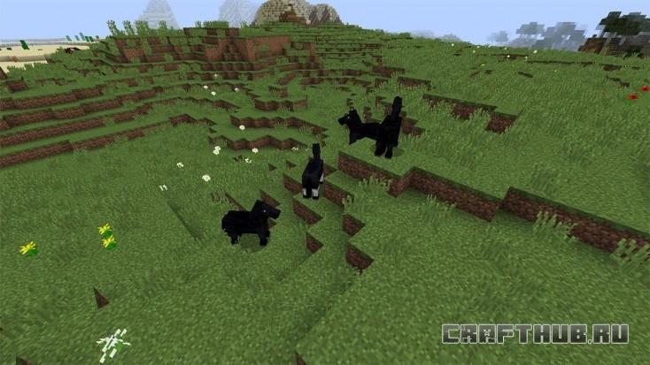 Лошади! Классные чёрные кони!